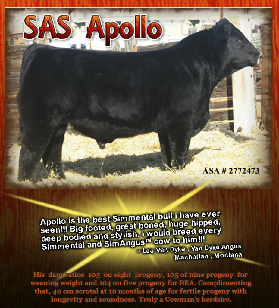 SAS Apollo Semen available contact Gary Jenkins for more information